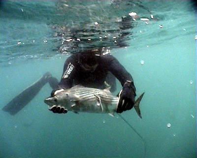 Как ловить рыбу в Крыму?