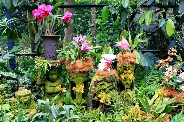 Купить цветы в ботаническом саду академгородка