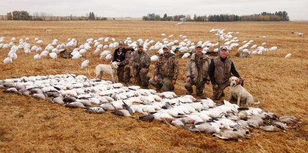 a research on the overpopulation of snow goose Hunters can help solve snow geese `plague' / overpopulation creates problems for delicate tundra along if hunting helps solve snow-goose overpopulation in a.